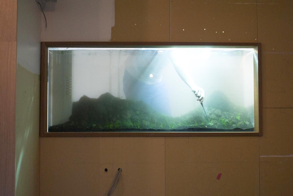 DESPERADO「水草水槽」立ち上げ作業風景 2013