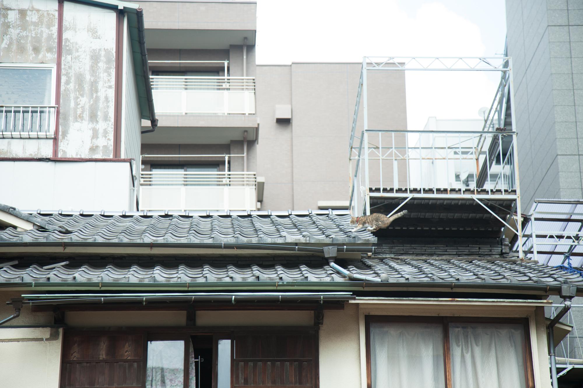 アサゲ・ニホンバシ 2012 photo:KAWASE Kazue http://www.nihonbashifriend.com/asage/archive/index.php